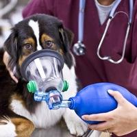 Реанимация и интенсивная терапия животных в Чехове