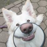Стоматология для собак в Чехове